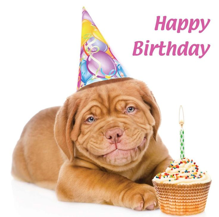 Details About Happy Birthday Card Smiling Dogue De