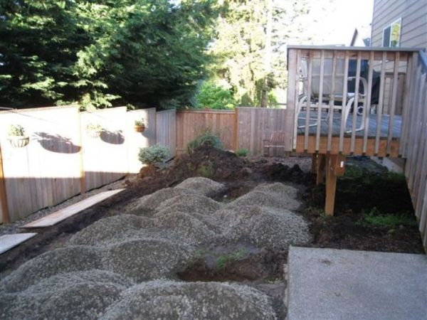 ideas grass landscaping