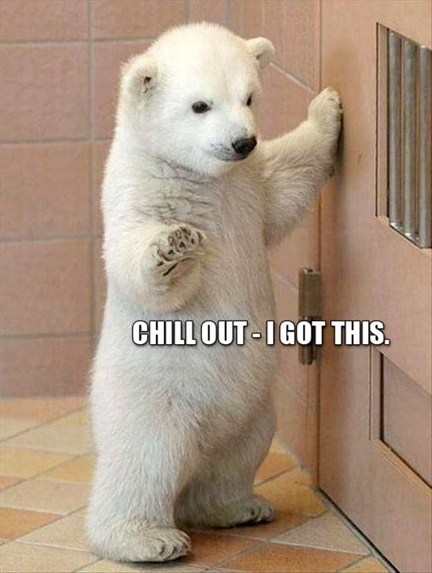 30 Funny animal captions – part 11 (30 pics) | Amazing Creatures