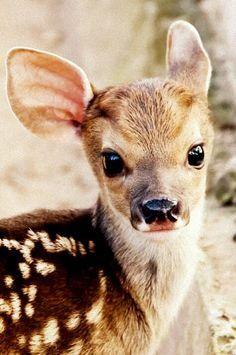 ALGO IMPRESIONANTE. Aunque parezca un animal salvaje, que lo es, es uno de los animales mas adorables