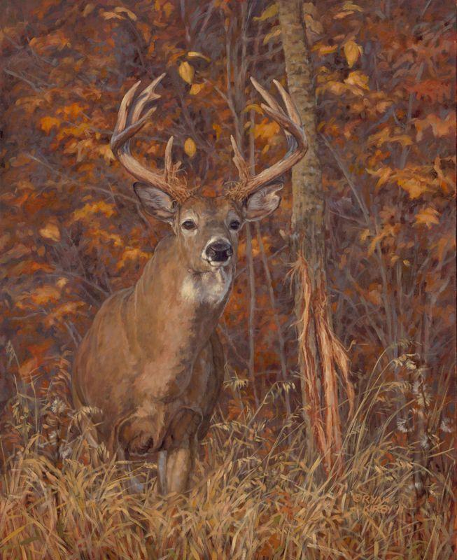 whitetail deer art prints  Google Search  art