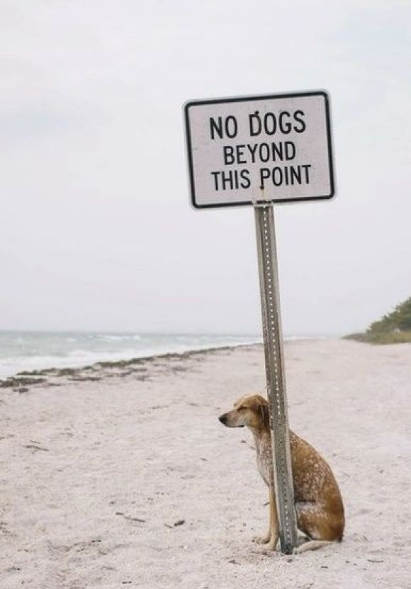 I'm sticking it to the man!  #cute dog #funny dog #dog #cute animals #puppy #puppies #pooch #poochie #doggie # doggy # doggies #dogs #funny dogs #funny puppies #funny puppy: Laughing, Rebel Dogs, Pet, Street Signs, Funny Stuff, Humor, Smile, The Rules, Animal