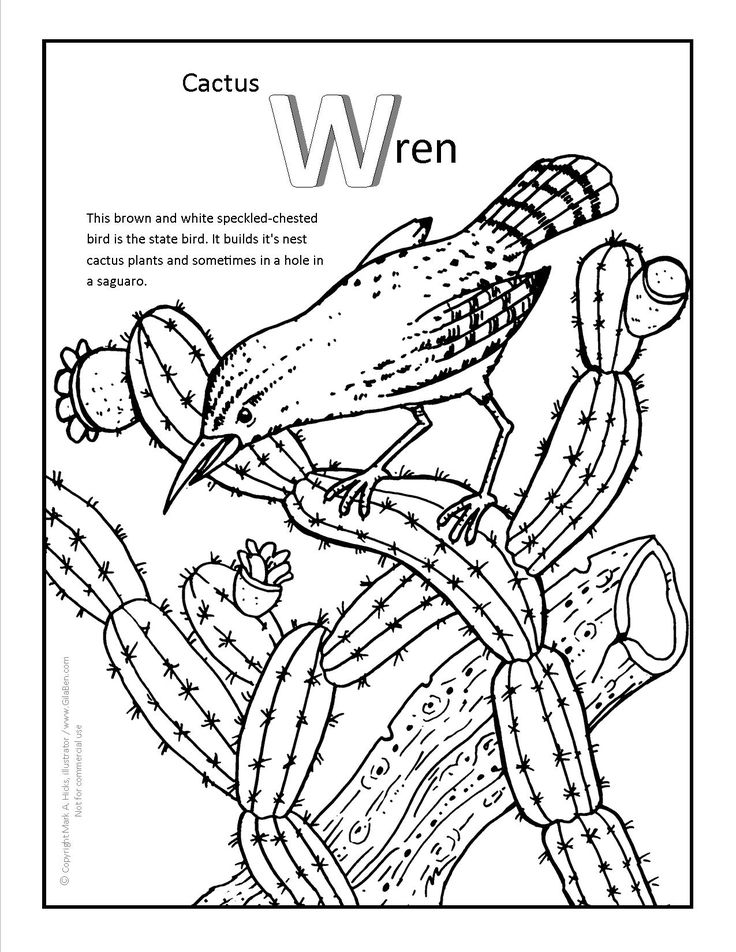 Cactus Wren Coloring page. More fun Arizona coloring pages