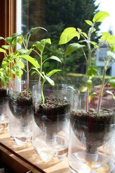 25 Best Ideas About Bottle Garden On Pinterest Looking Glass