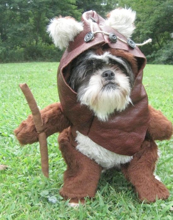 1000+ images about Dogs in Costumes on Pinterest