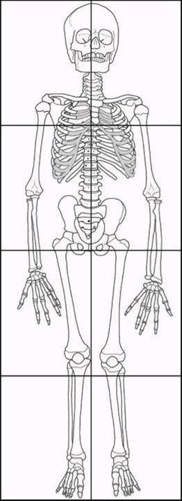 FREE Skeleton and Skeletal System Printables, Activities