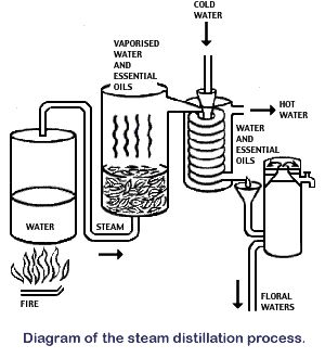 24 best images about Distilling Essential Oils on