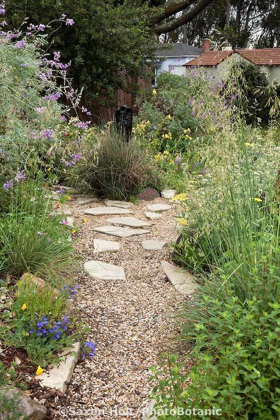 25 Best Ideas About California Native Garden On Pinterest