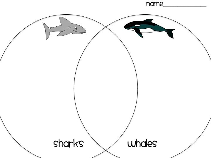 25+ best ideas about Food Chain Diagram on Pinterest
