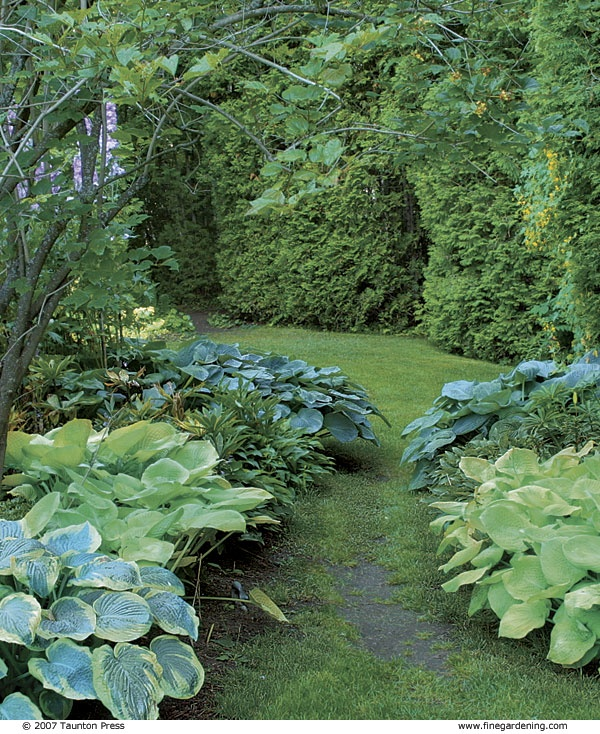 path flanked hostas with colorful