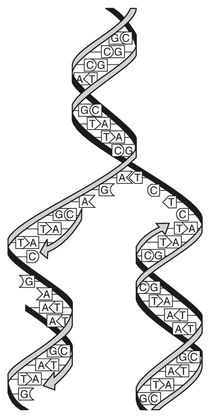 17 Best images about Bio Unit 7: DNA/RNA on Pinterest