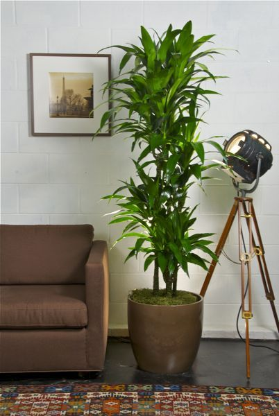 Best Indoor Floor Plants