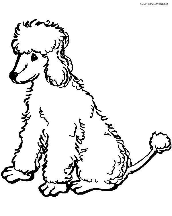 17 Best images about Everything Poodle on Pinterest