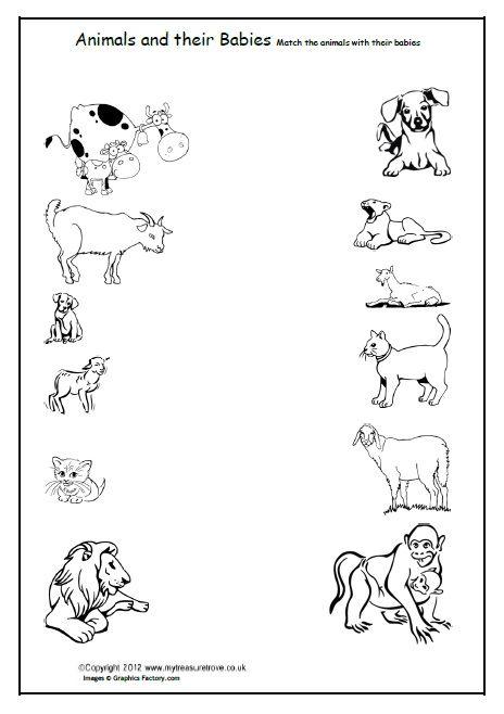 Mammals wild animal best blog: Pet and wild animals worksheet