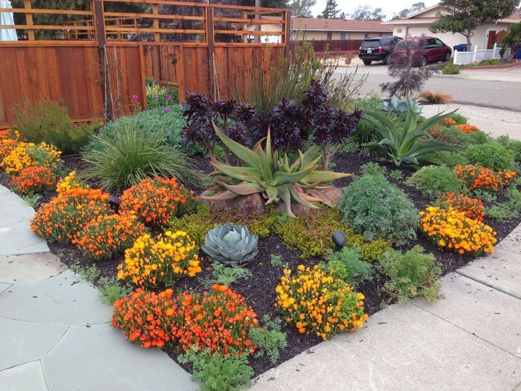 25 Best Ideas About Drought Resistant Landscaping On Pinterest