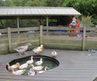 83 best images about DUCK PONDS on Pinterest | Pond ideas ...