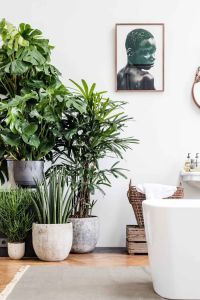 25+ best ideas about Indoor plant decor on Pinterest