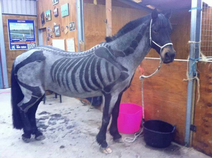 Halloween Body Clipped Skeleton Horse Horse Hair Styles