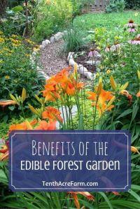 25+ best ideas about Backyard vegetable gardens on ...