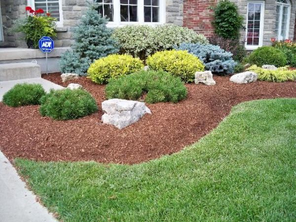 evergreen landscaping plants