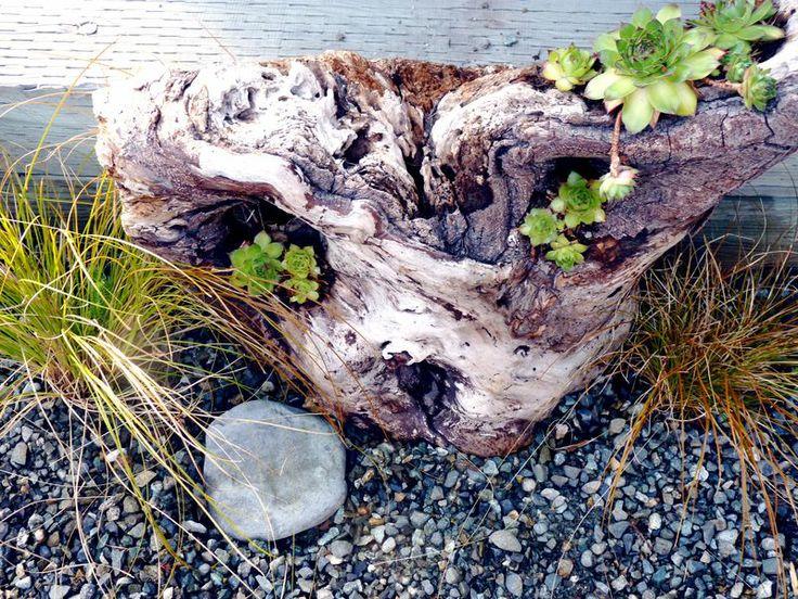 38 Best Images About Stumpery Driftwood Garden On Pinterest