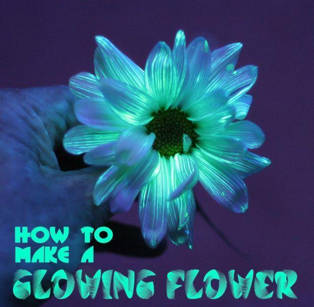 25 Best Ideas About Glowing Flowers On Pinterest Garden Ideas