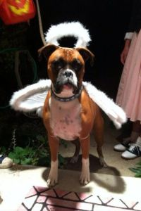 164 best images about Boxer art on Pinterest