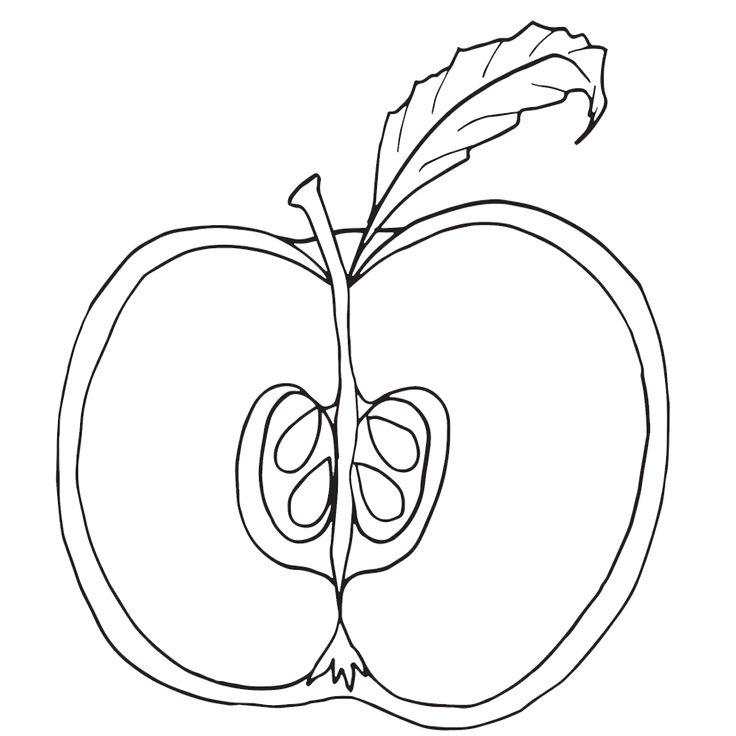 Parts of an apple coloring pages, nomenclature cards
