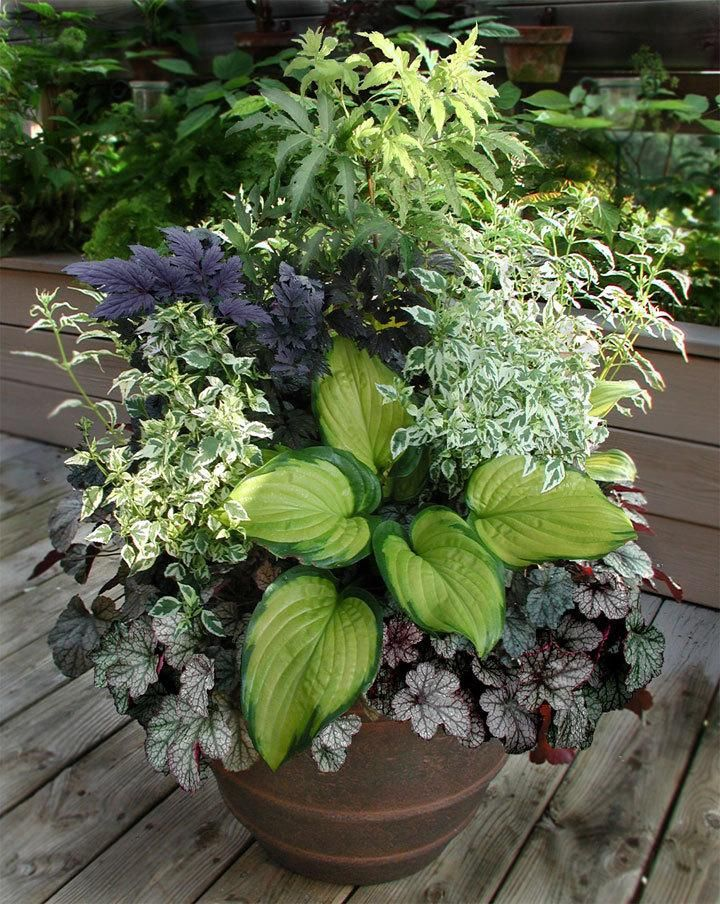 112 Best Images About Shade Container Gardens On Pinterest