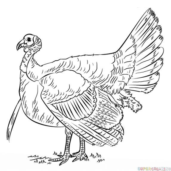 22 best images about Животные и птицы on Pinterest