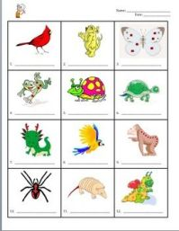 animal worksheet: NEW 635 ANIMAL CLASSIFICATION WORKSHEETS ...