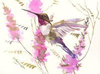 1000+ ideas about Hummingbird Drawing on Pinterest ...