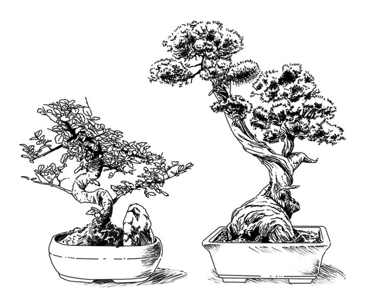 1355 best images about Bonsai on Pinterest