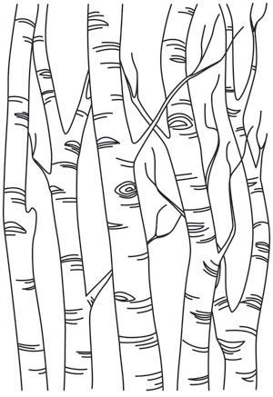 Best 25+ Tree outline ideas on Pinterest