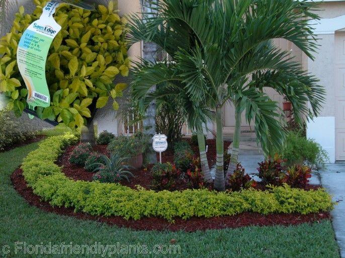 25 Best Ideas About Florida Gardening On Pinterest Florida
