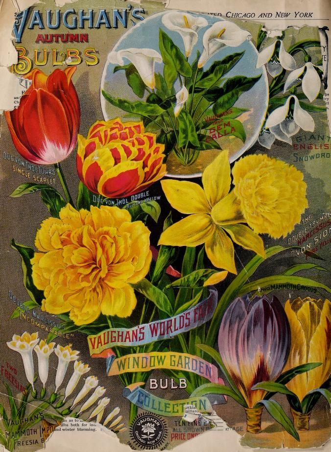 697 Best Ideas About Vintage Daffodil On Pinterest