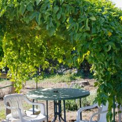 Swing Chair Sydney Folding Beach With Footrest Passionfruit Vine | Nest Pinterest D And Vines