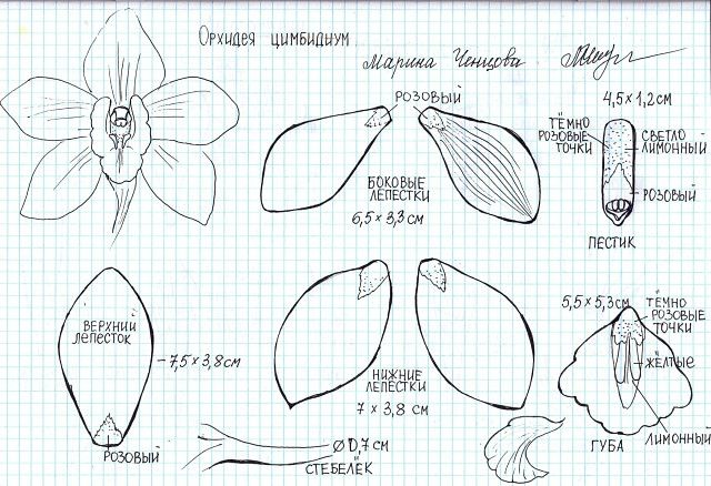 1000+ images about Flower Templates/Instructions on