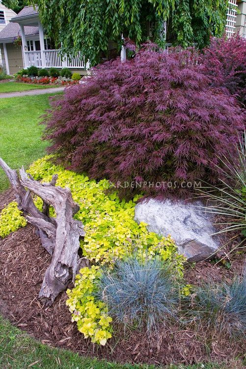 25 Best Ideas About Evergreen Garden On Pinterest Evergreen