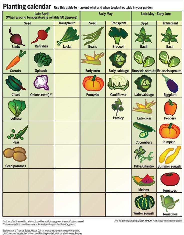 25 Best Ideas About Planting Vegetables On Pinterest Backyard