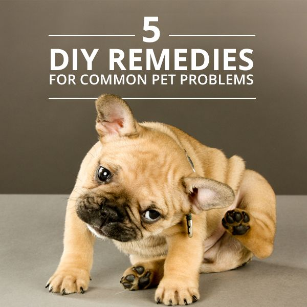 5 Natural Home Remedies For Common Pet Problems Love Pet