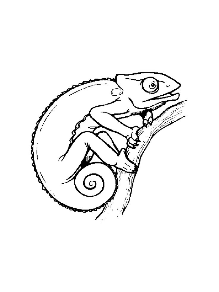 17 Best images about Chameleons for Creative Coloring! on