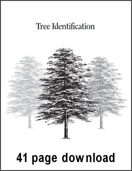 25+ best ideas about Tree identification on Pinterest