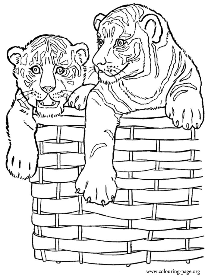 1000 Images About Coloring Therapy