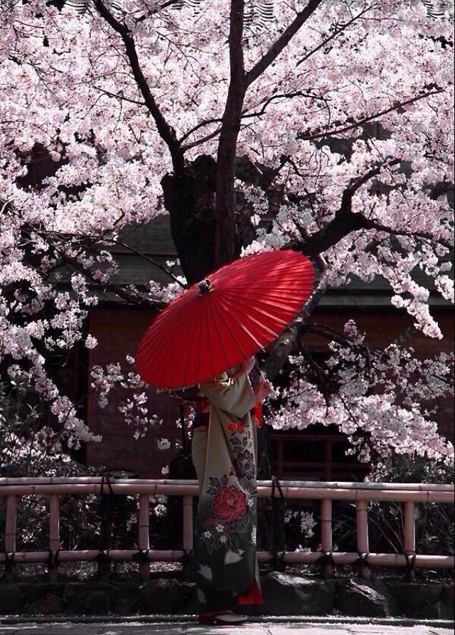 Tokyo Geisha Girl Wallpaper Background 181 Best Umbrellas Images On Pinterest