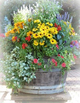 17 Best Images About Outdoor Flower Container Ideas On Pinterest