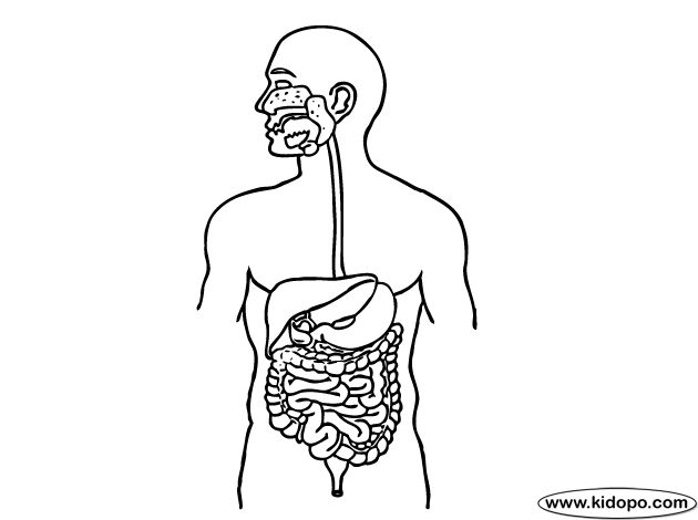 Immune System Coloring Pages Coloring Pages