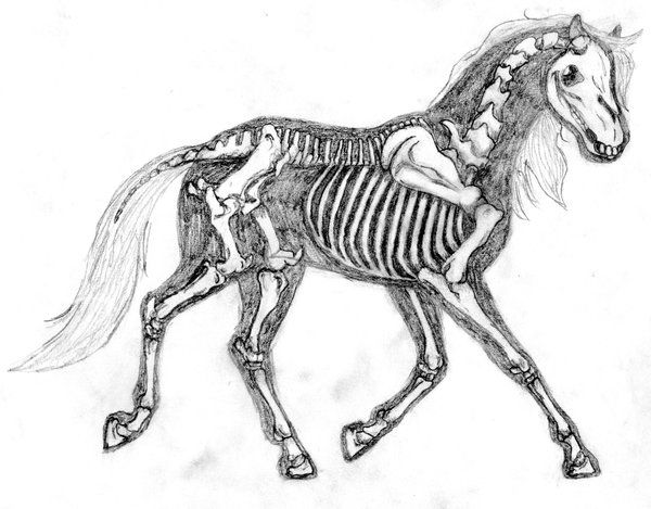 115 best images about drawing horses 101: anatomy on