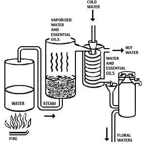 25+ best ideas about Steam Distillation on Pinterest