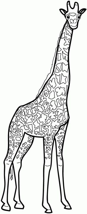 113 best Kids-Zoo printables, coloring pages, clip arts